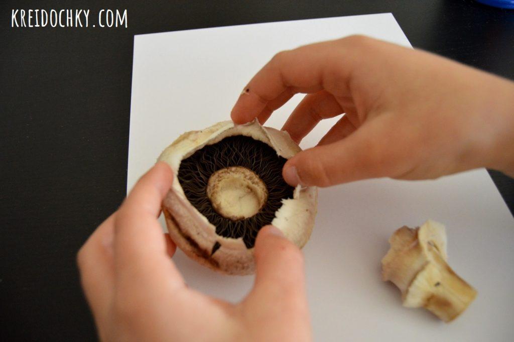 спори грибів